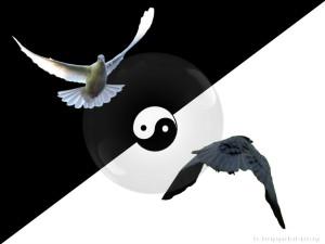 yin-yang-bird.jpg